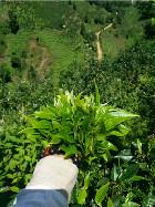 荣东达普洱茶加盟风险高吗?