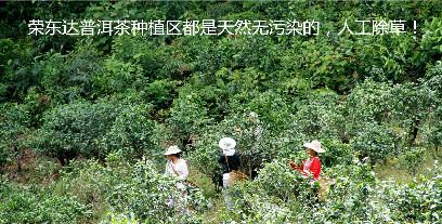 云南双江普洱茶代理成就你的事业梦!
